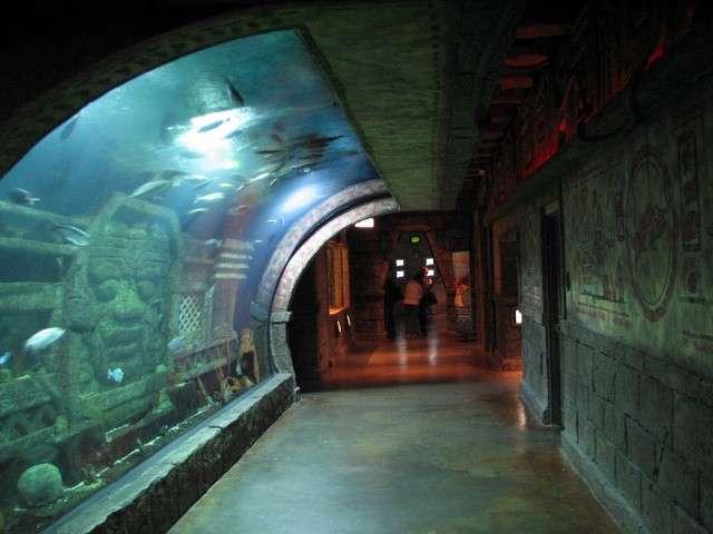 Review Of Downtown Aquarium Houston Downtown Aquarium Houston
